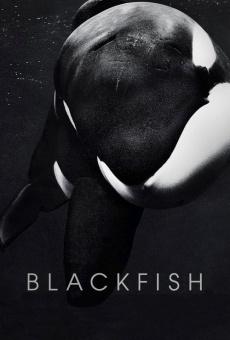 Blackfish online free