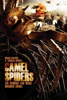 Do you like Camel Spiders ? Comment in Facebook